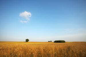 Łąki i pola